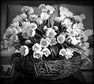 Цветы веточки